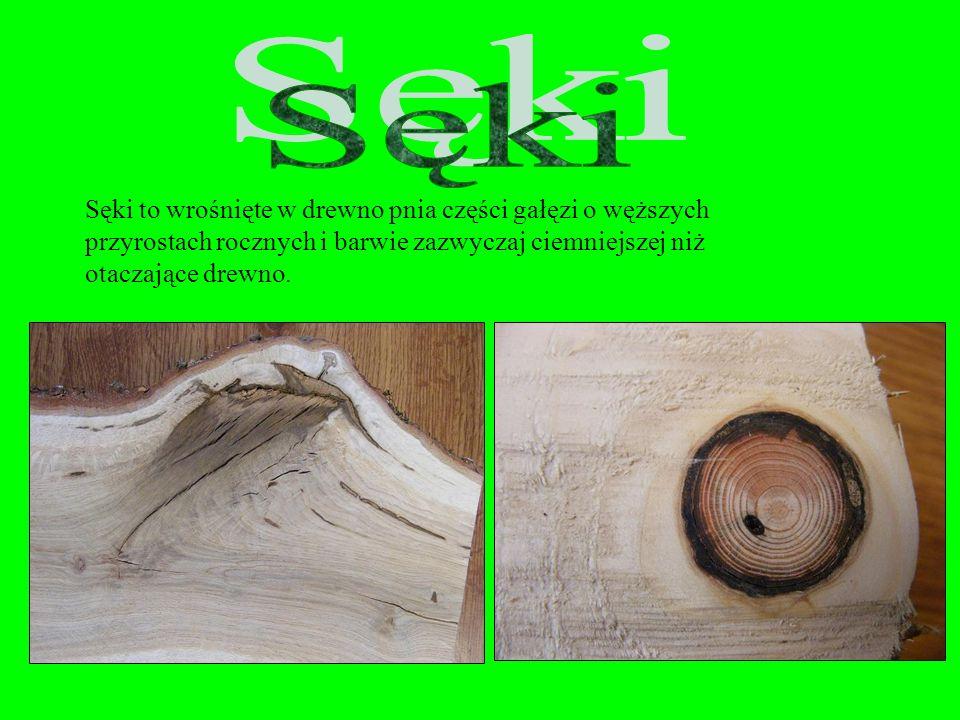 Sęki Sęki to wrośnięte w drewno pnia części gałęzi o węższych przyrostach rocznych i barwie zazwyczaj ciemniejszej niż otaczające drewno.