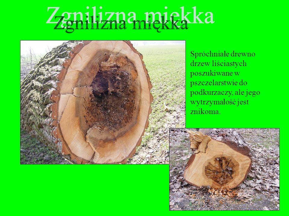 Zgnilizna miękka Spróchniałe drewno