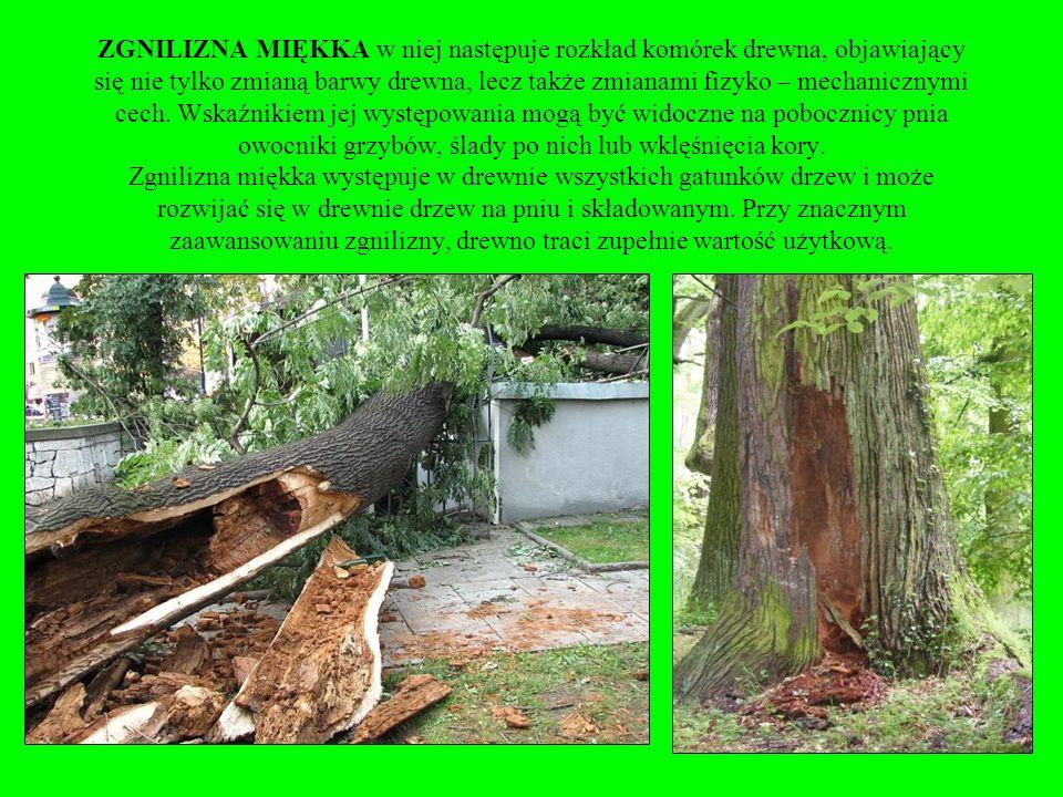 ZGNILIZNA MIĘKKA w niej następuje rozkład komórek drewna, objawiający się nie tylko zmianą barwy drewna, lecz także zmianami fizyko – mechanicznymi cech.