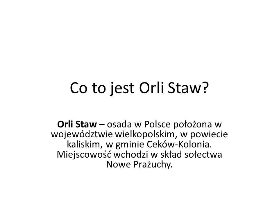 Co to jest Orli Staw