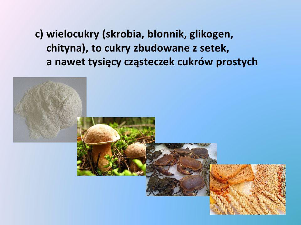 c) wielocukry (skrobia, błonnik, glikogen, chityna), to cukry zbudowane z setek, a nawet tysięcy cząsteczek cukrów prostych