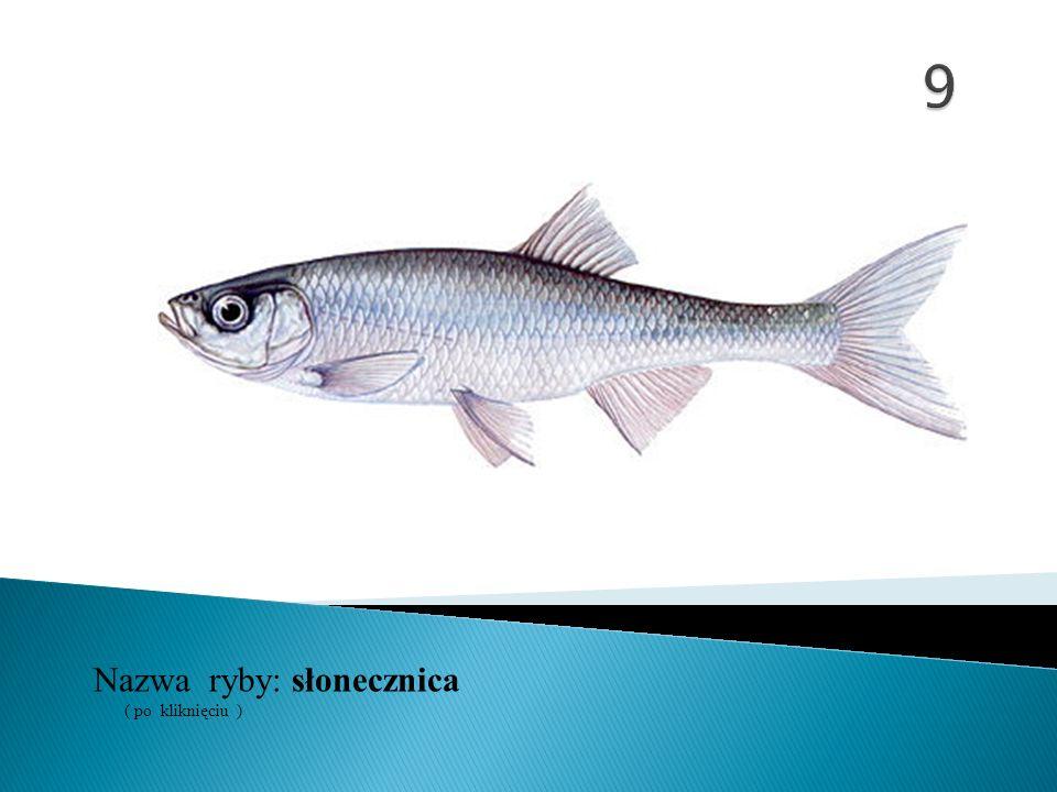9 Nazwa ryby: ( po kliknięciu ) słonecznica