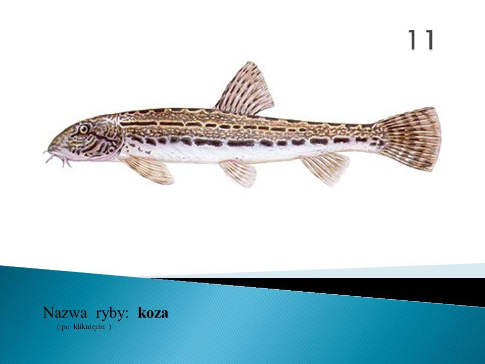 11 Nazwa ryby: ( po kliknięciu ) koza