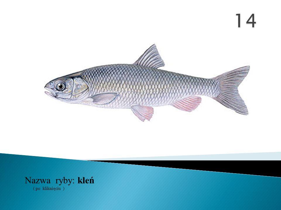 14 Nazwa ryby: ( po kliknięciu ) kleń