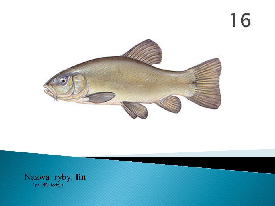 16 Nazwa ryby: ( po kliknięciu ) lin