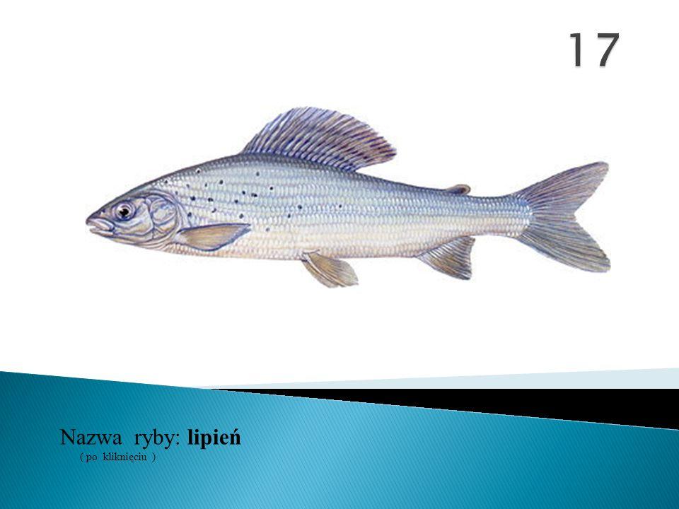 17 Nazwa ryby: ( po kliknięciu ) lipień