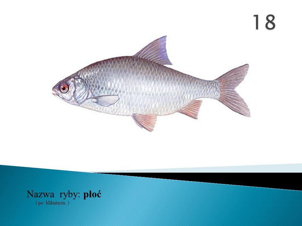 18 Nazwa ryby: ( po kliknięciu ) płoć