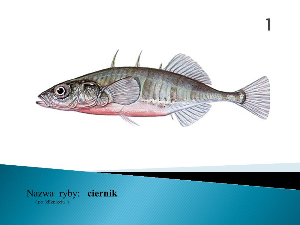 1 Nazwa ryby: ( po kliknięciu ) ciernik
