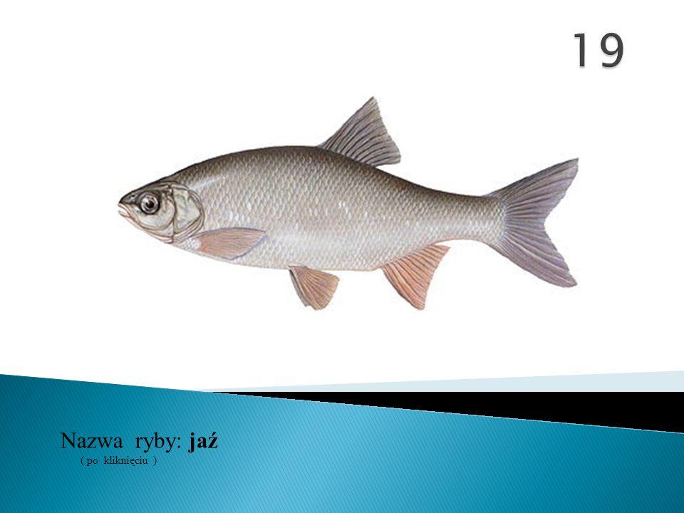 19 Nazwa ryby: ( po kliknięciu ) jaź