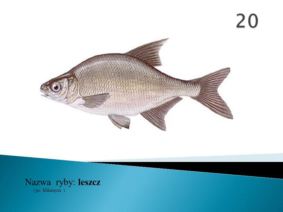 20 Nazwa ryby: ( po kliknięciu ) leszcz