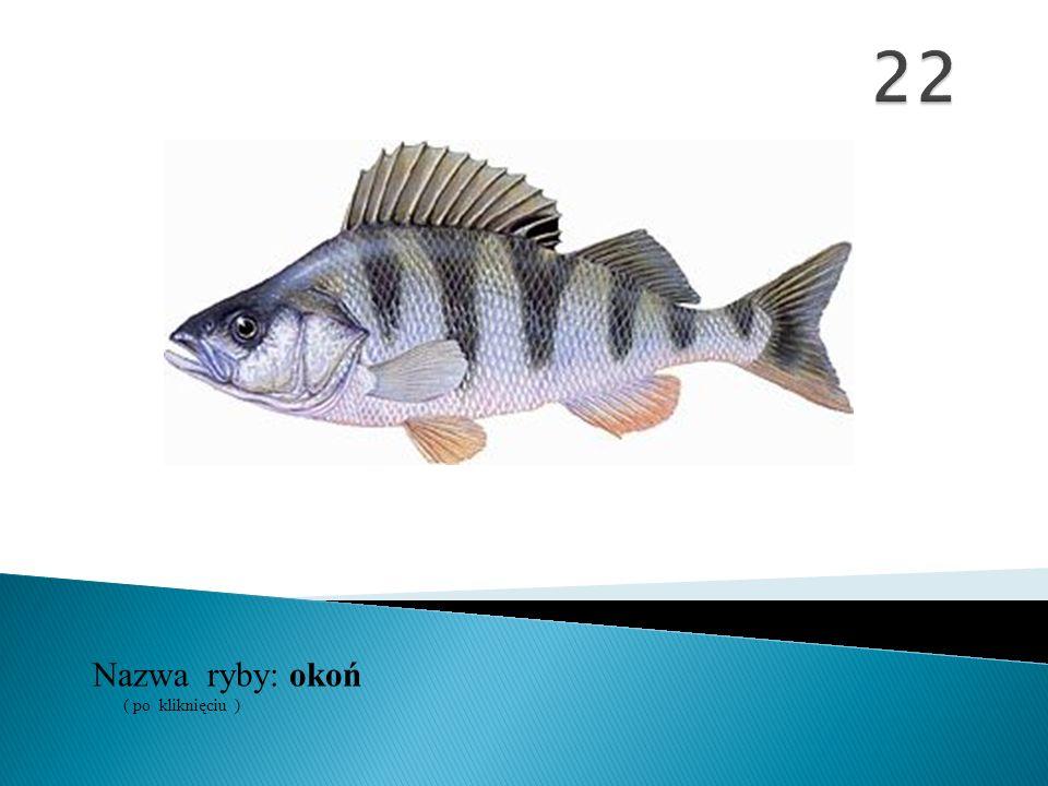 22 Nazwa ryby: ( po kliknięciu ) okoń