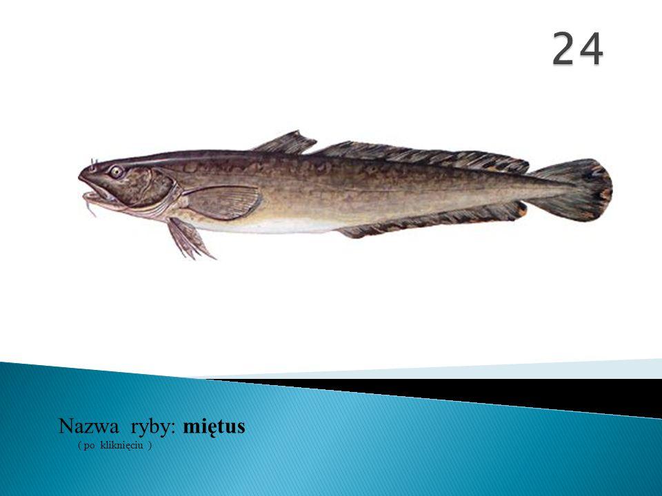 24 Nazwa ryby: ( po kliknięciu ) miętus