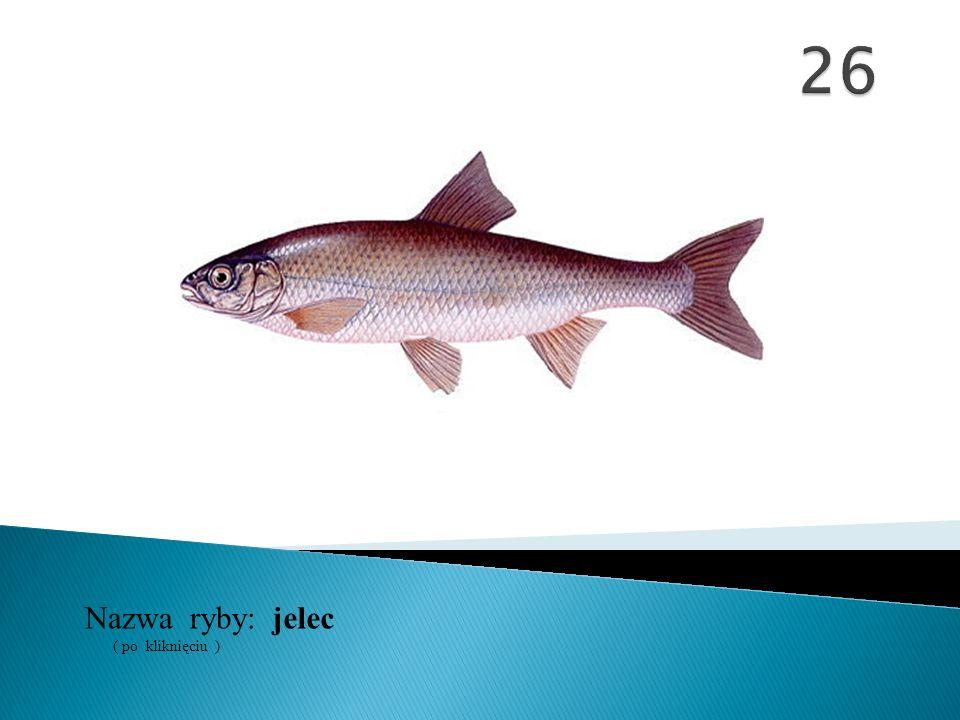 26 Nazwa ryby: ( po kliknięciu ) jelec