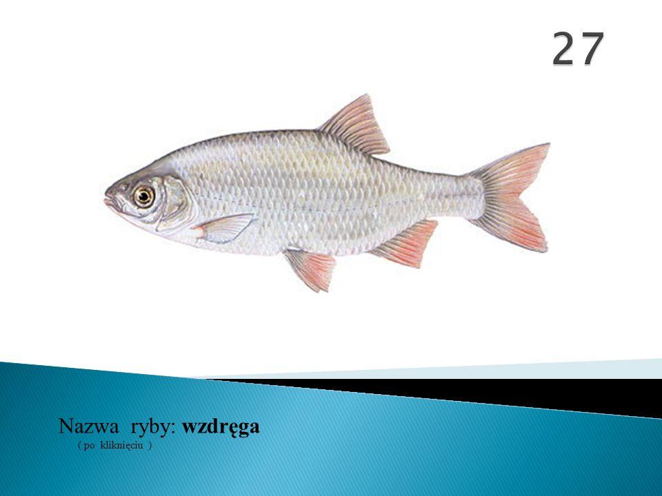 27 Nazwa ryby: ( po kliknięciu ) wzdręga