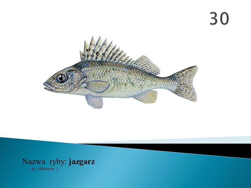 30 Nazwa ryby: ( po kliknięciu ) jazgarz
