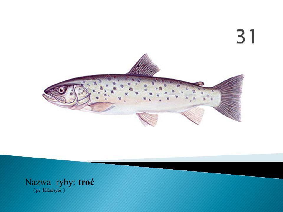 31 Nazwa ryby: ( po kliknięciu ) troć
