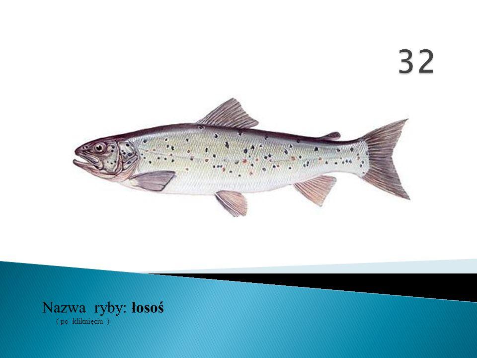 32 Nazwa ryby: ( po kliknięciu ) łosoś