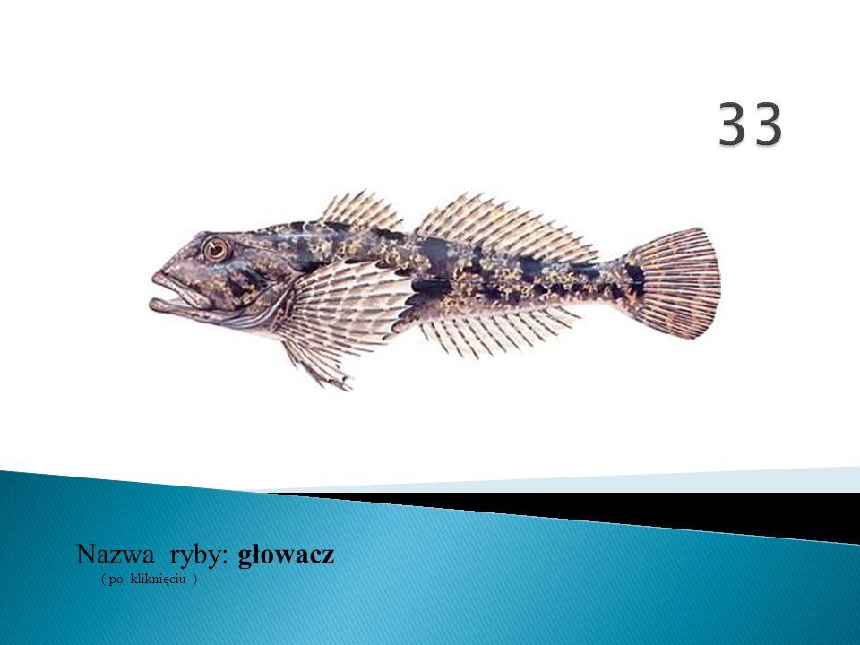 33 Nazwa ryby: ( po kliknięciu ) głowacz