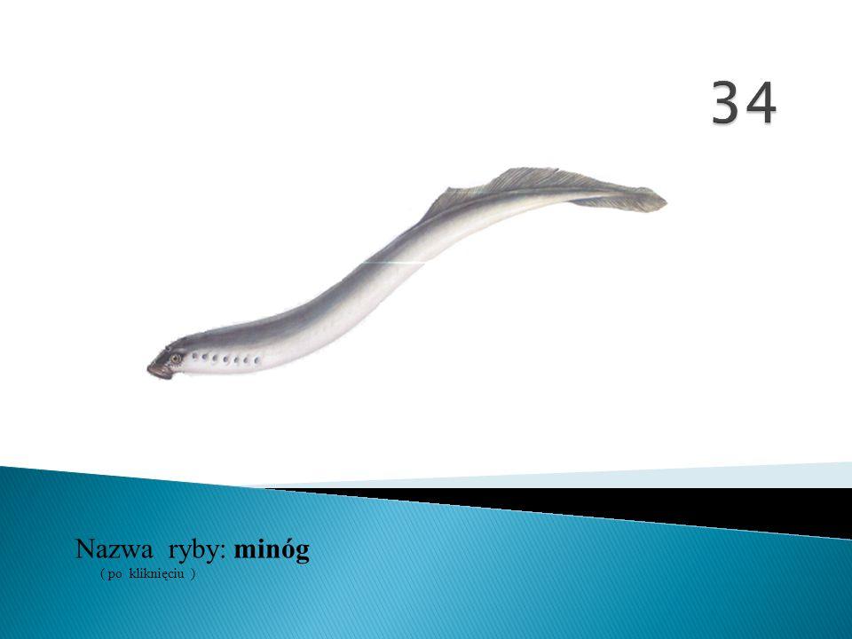 34 Nazwa ryby: ( po kliknięciu ) minóg