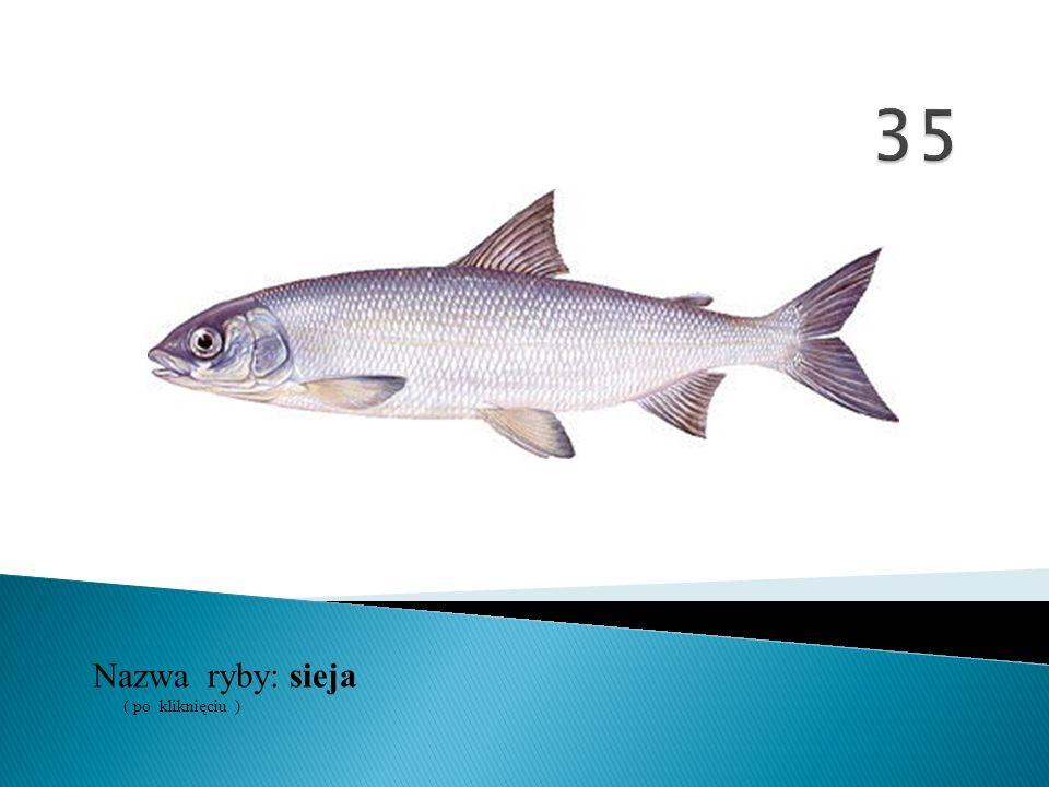 35 Nazwa ryby: ( po kliknięciu ) sieja