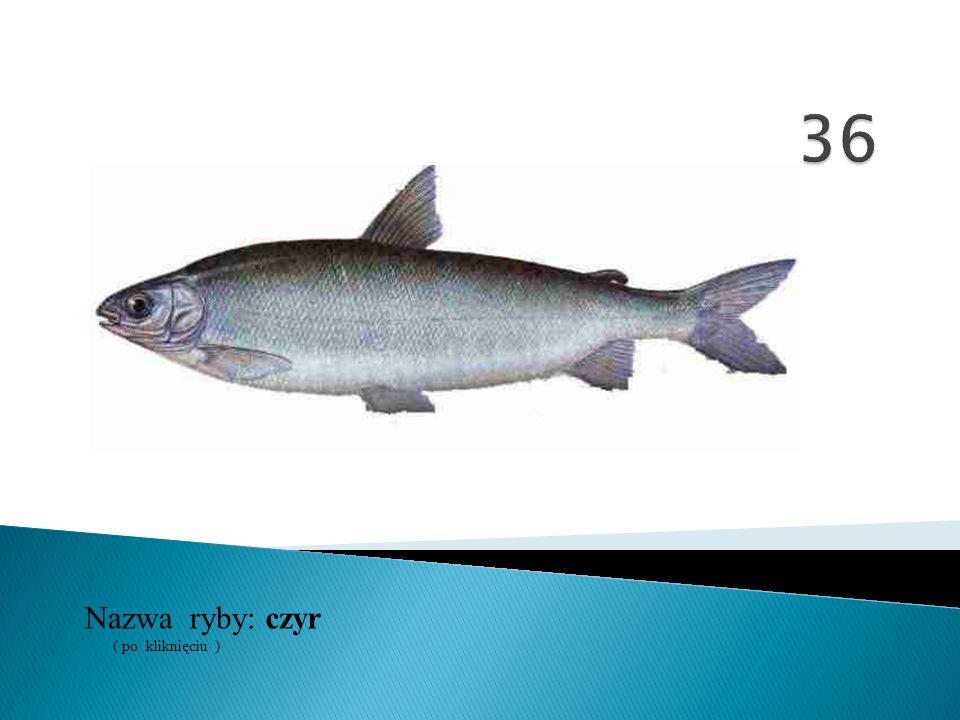 36 Nazwa ryby: ( po kliknięciu ) czyr