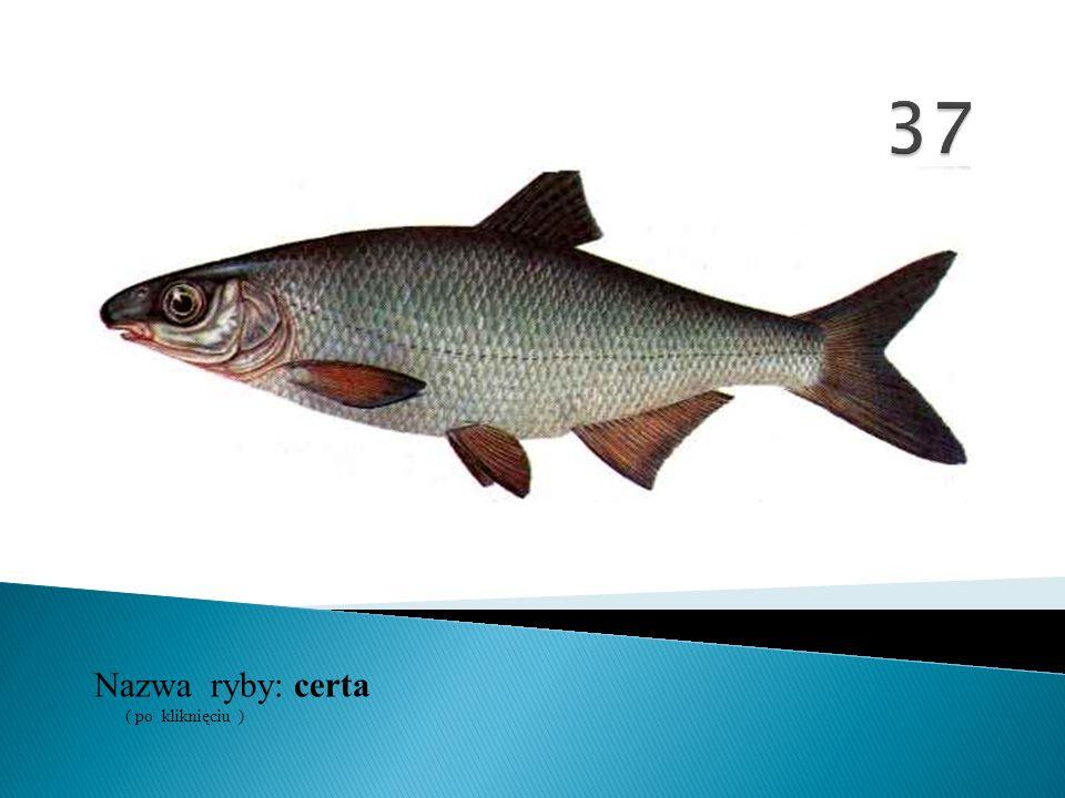 37 Nazwa ryby: ( po kliknięciu ) certa
