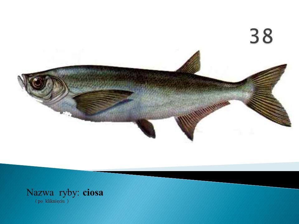 38 Nazwa ryby: ( po kliknięciu ) ciosa
