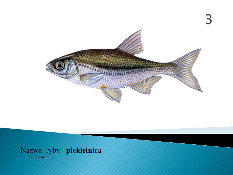 3 Nazwa ryby: ( po kliknięciu ) piekielnica