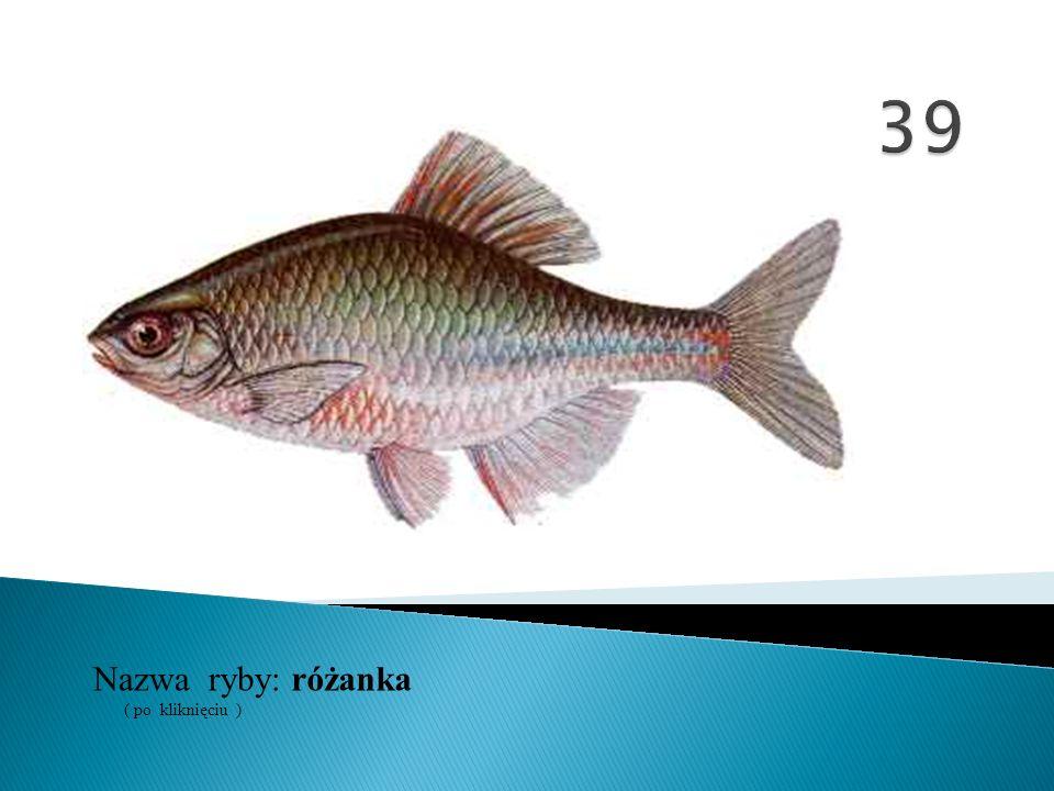 39 Nazwa ryby: ( po kliknięciu ) różanka