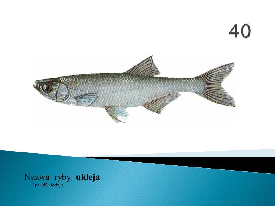 40 Nazwa ryby: ( po kliknięciu ) ukleja