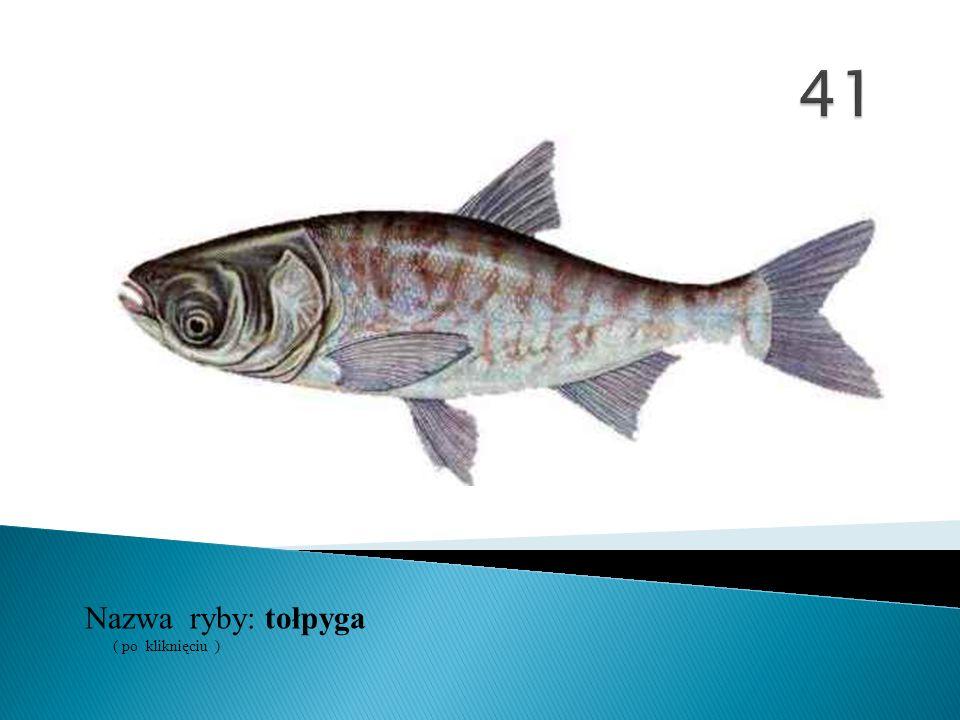 41 Nazwa ryby: ( po kliknięciu ) tołpyga