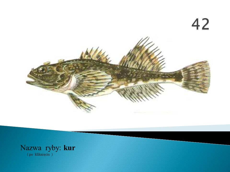 42 Nazwa ryby: ( po kliknięciu ) kur