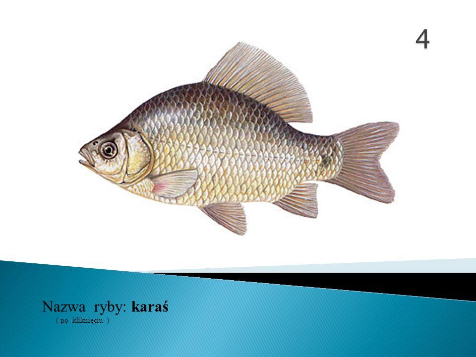 4 Nazwa ryby: ( po kliknięciu ) karaś