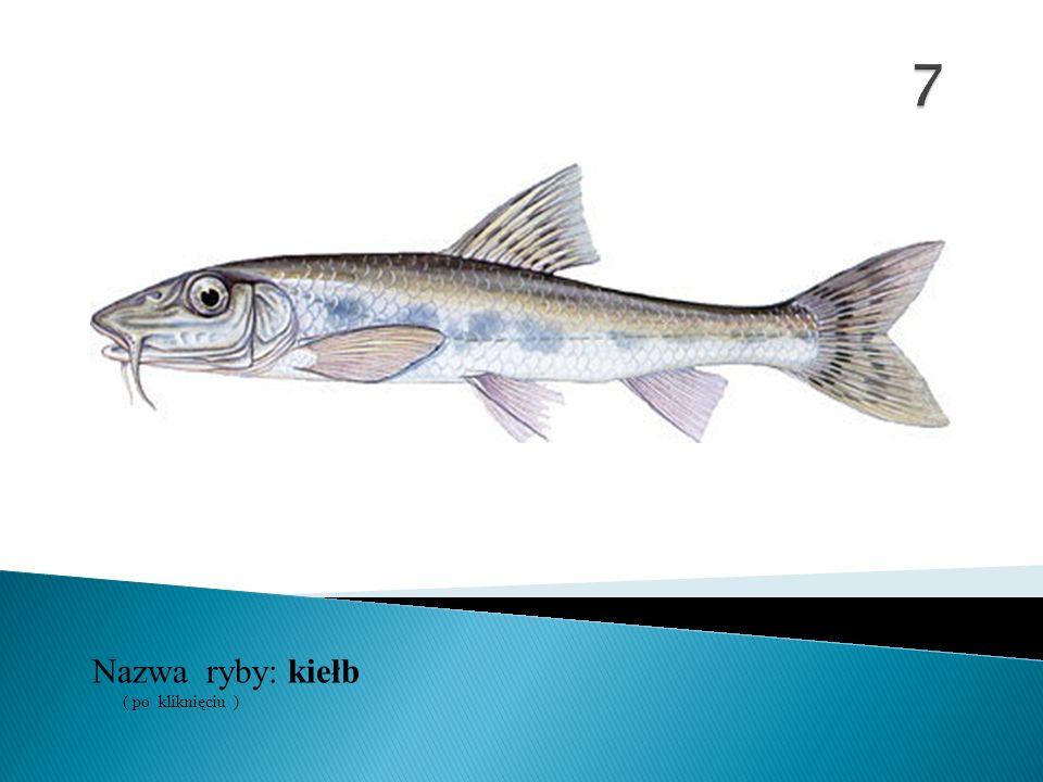 7 Nazwa ryby: ( po kliknięciu ) kiełb