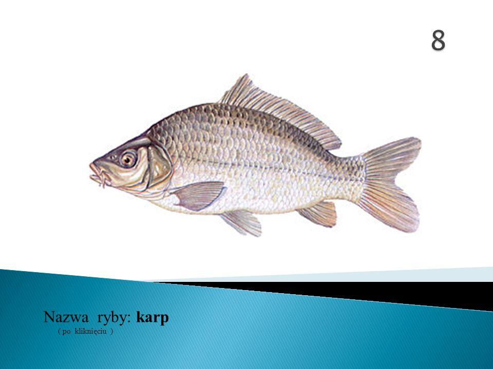 8 Nazwa ryby: ( po kliknięciu ) karp