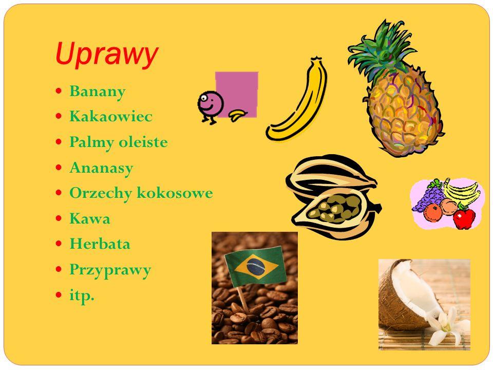 Uprawy Banany Kakaowiec Palmy oleiste Ananasy Orzechy kokosowe Kawa
