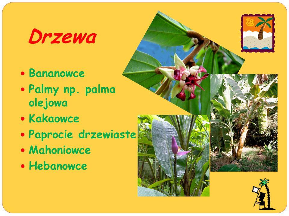 Drzewa Bananowce Palmy np. palma olejowa Kakaowce Paprocie drzewiaste