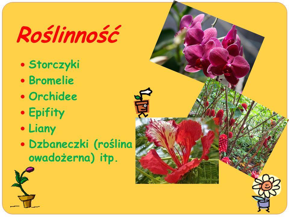 Roślinność Storczyki Bromelie Orchidee Epifity Liany