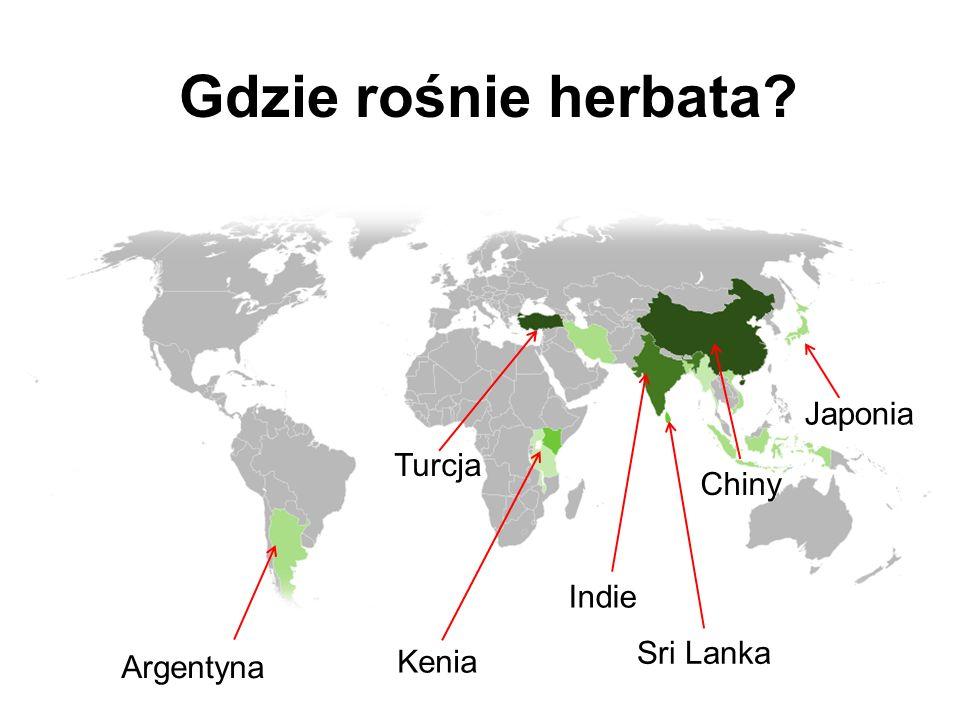 Gdzie rośnie herbata Japonia Turcja Chiny Indie Sri Lanka Kenia
