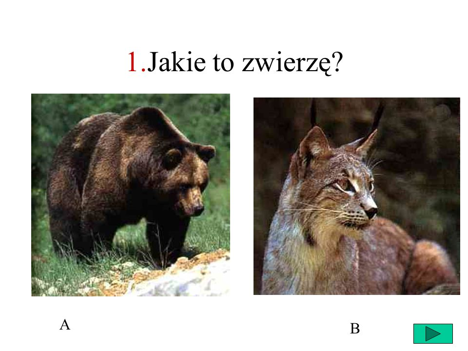 1.Jakie to zwierzę A B