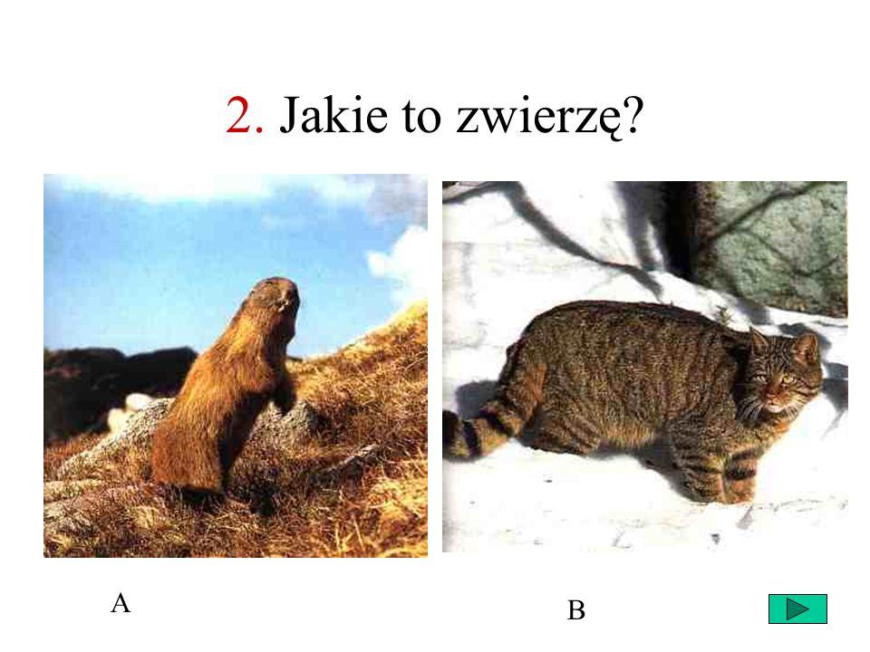 2. Jakie to zwierzę A B