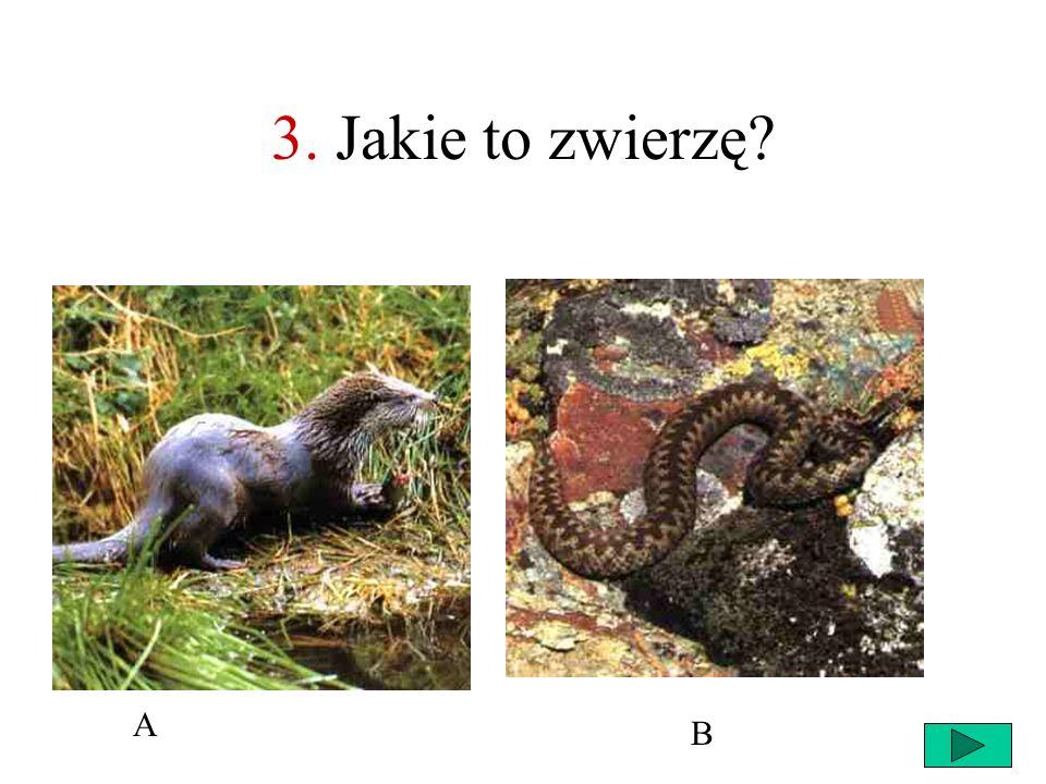 3. Jakie to zwierzę A B