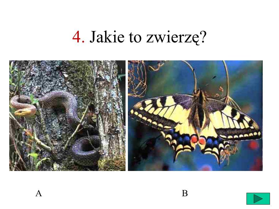 4. Jakie to zwierzę A B