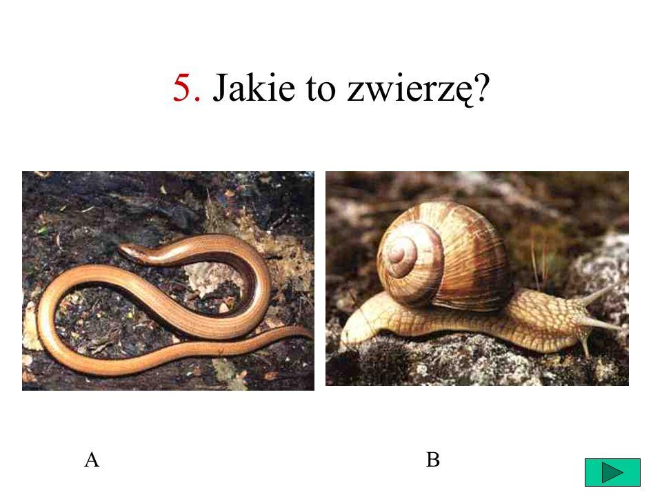 5. Jakie to zwierzę A B