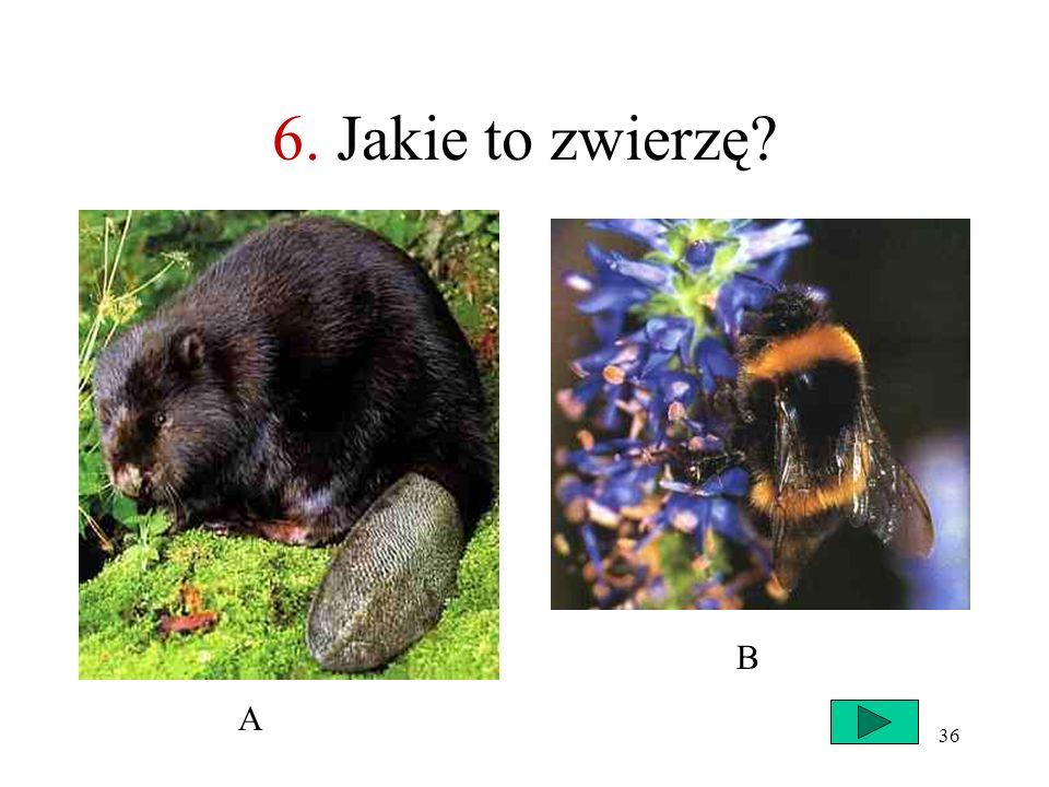 6. Jakie to zwierzę B A