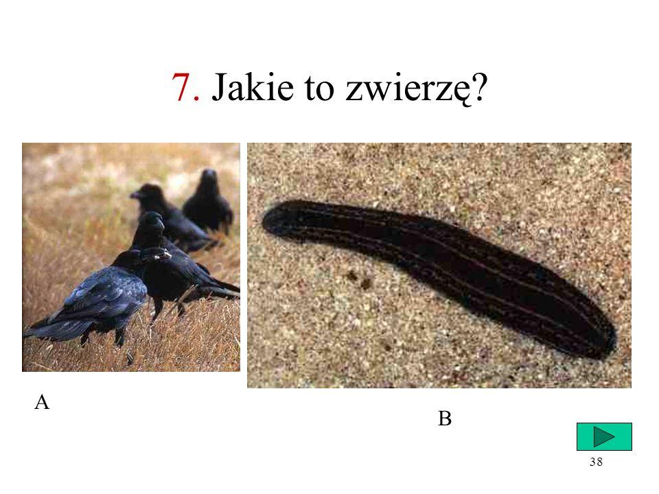 7. Jakie to zwierzę A B