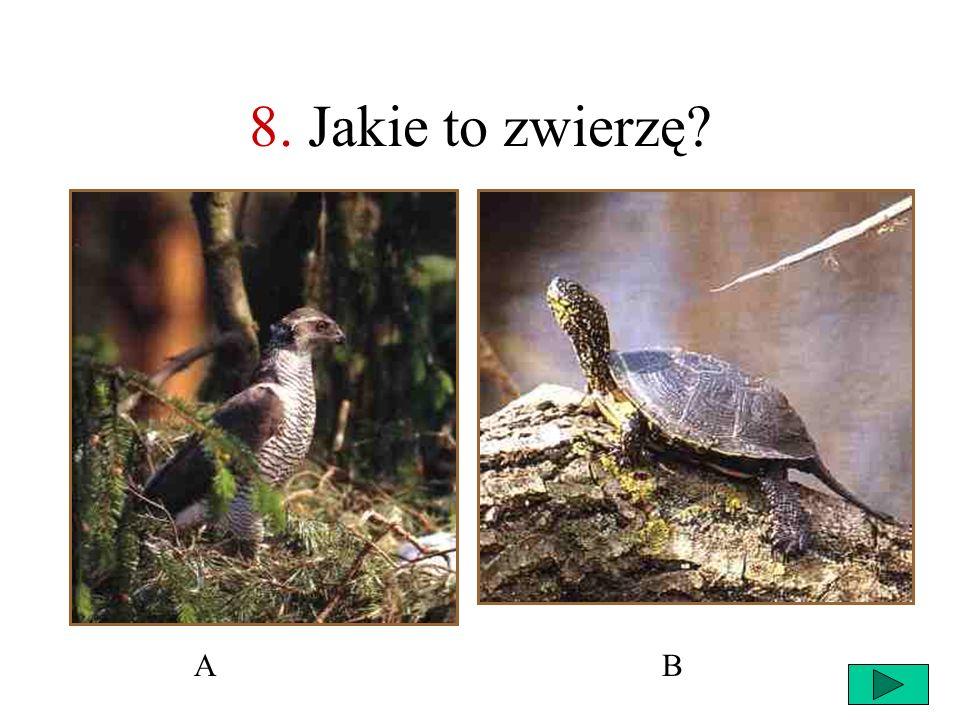 8. Jakie to zwierzę A B