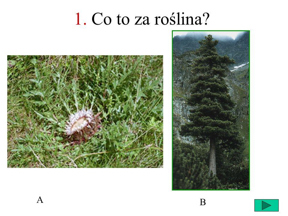 1. Co to za roślina A B