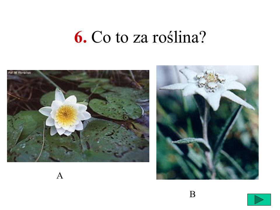 6. Co to za roślina A B