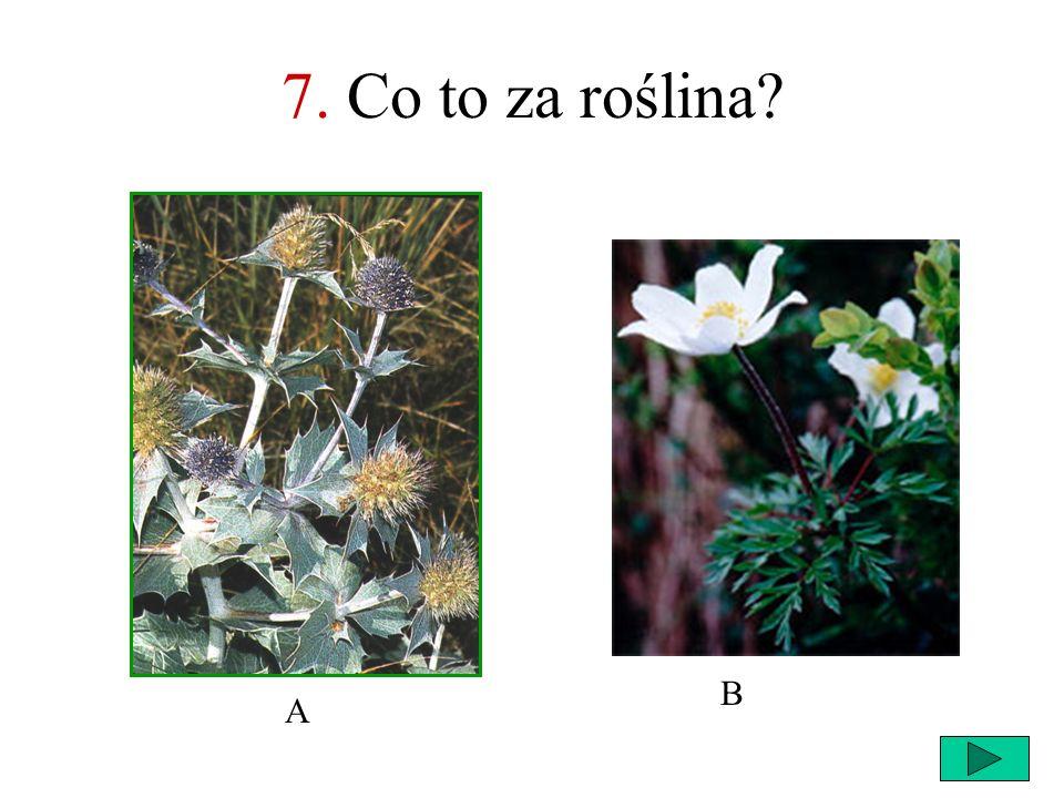 7. Co to za roślina B A